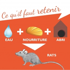 Rat Trappes Lutte Illustration